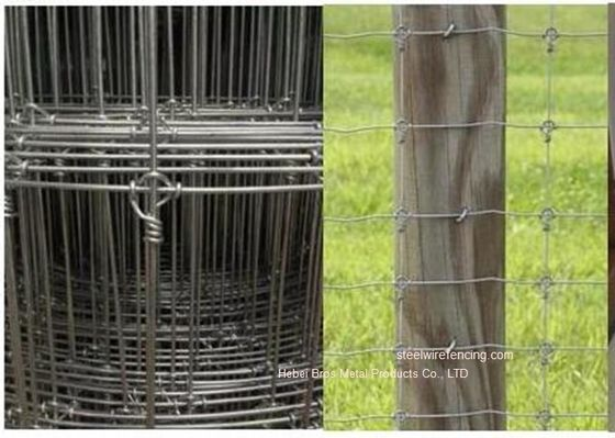 China Galvanized Grassland Cattle Wire Fence / Fixed Knot Woven Deer Fence For Pasture supplier
