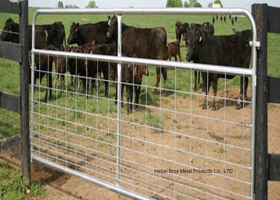 China Fully Welded Hot Dipped Gal. Farm Steel Gates , Liivestock Fence Panels supplier
