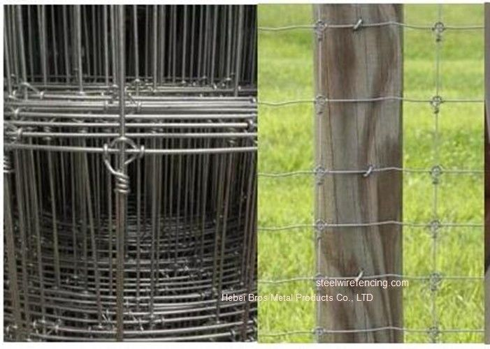 Galvanized Grassland Cattle Wire Fence / Fixed Knot Woven Deer Fence