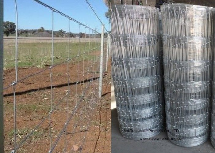 Cattle Farming Fence / Hot-Dipped Filed Wire Mesh Fence For Poultry