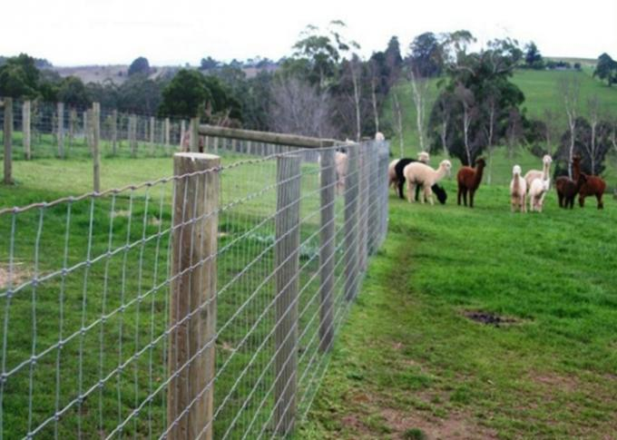 Hinge Joint Cattle Wire Fence High Strength For Protecting Farmland